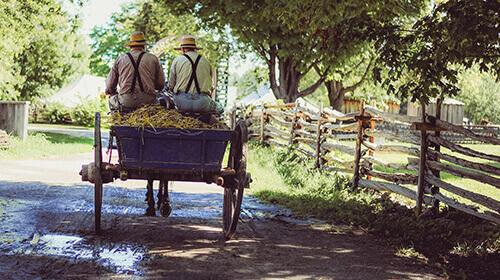 Lustige Bauernregeln und Bauernwitze