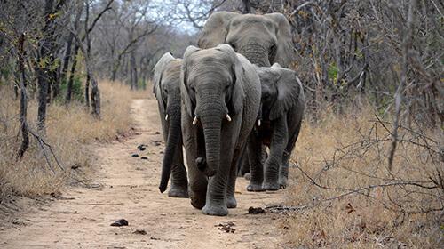 Lustiges über Elefanten: Elefantenwitze