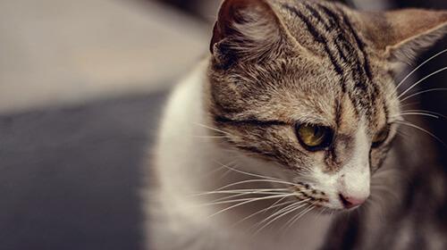 Tierwitze - Lustige Witze und Sprüche über Tiere